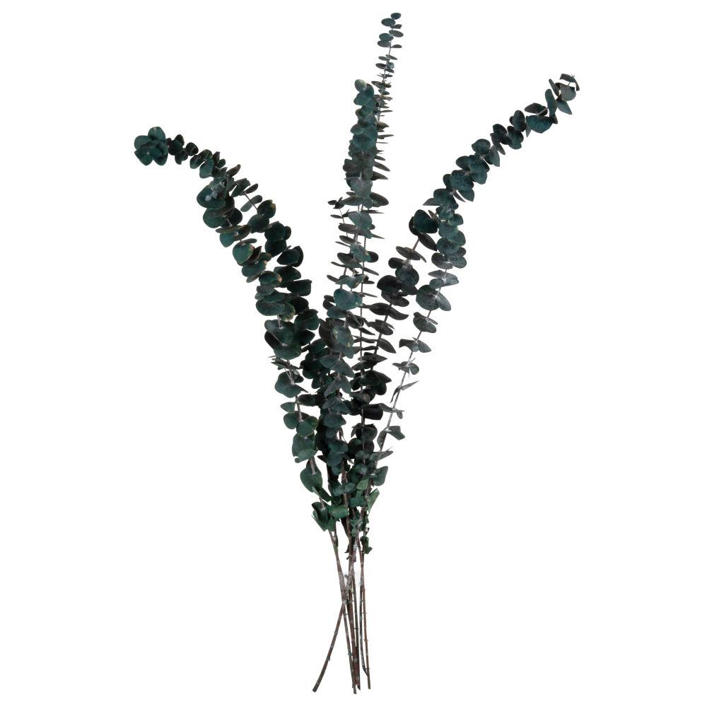 Bouquet d'eucalyptus séché