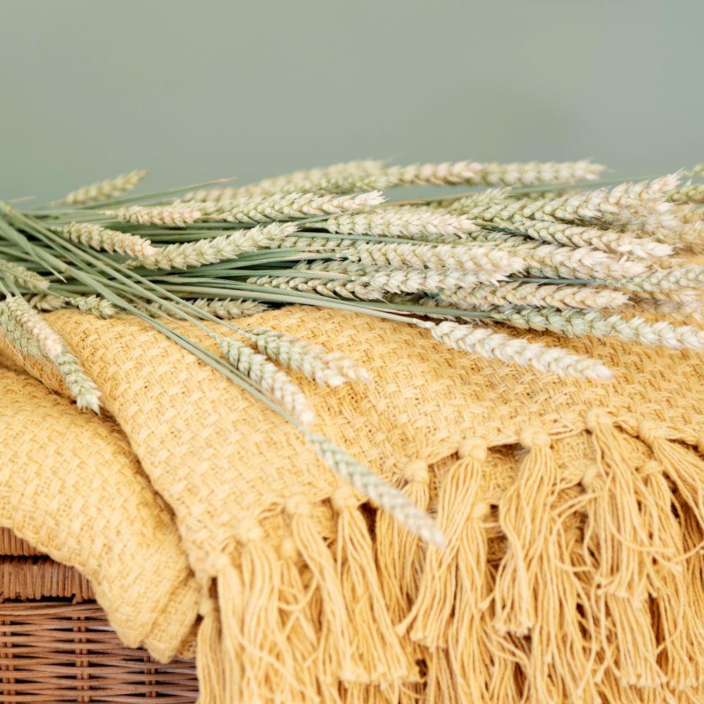 Bouquet de blé triticum séché