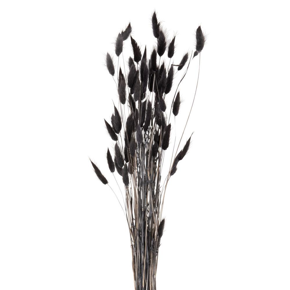 Bouquet de chatons séchés noirs