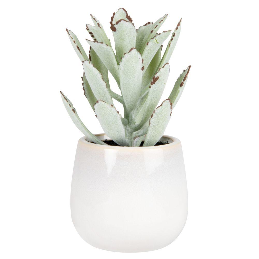 Succulente pot en grès blanc