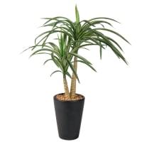Artificial Yucca in Black Pot