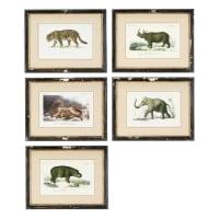 Cornici con animali (x5) 34x44 cm Histoire Naturelle