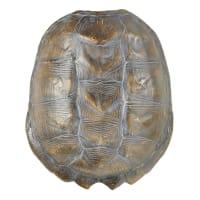 Déco murale carapace tortue noire 37x44 Duma