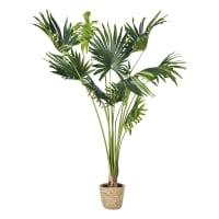 KOLOA - Künstliche Palme im geflochtenen Übertopf H146