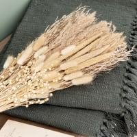 PAMPA - Strauß mit beigefarbenen Trockenblumen