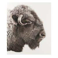 Tableau bison en Plexiglas® 100x120 Lakota
