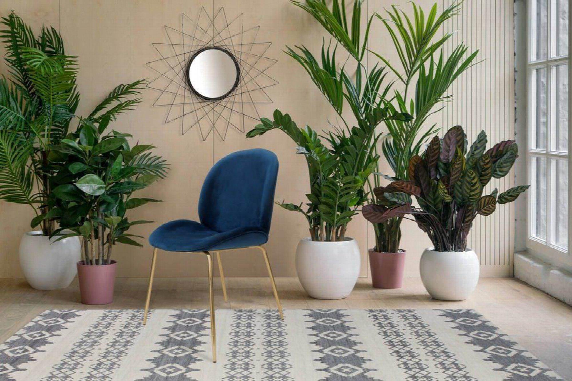 Chaise rembourrée assise bleu pétrole pieds doré (lot de 2)