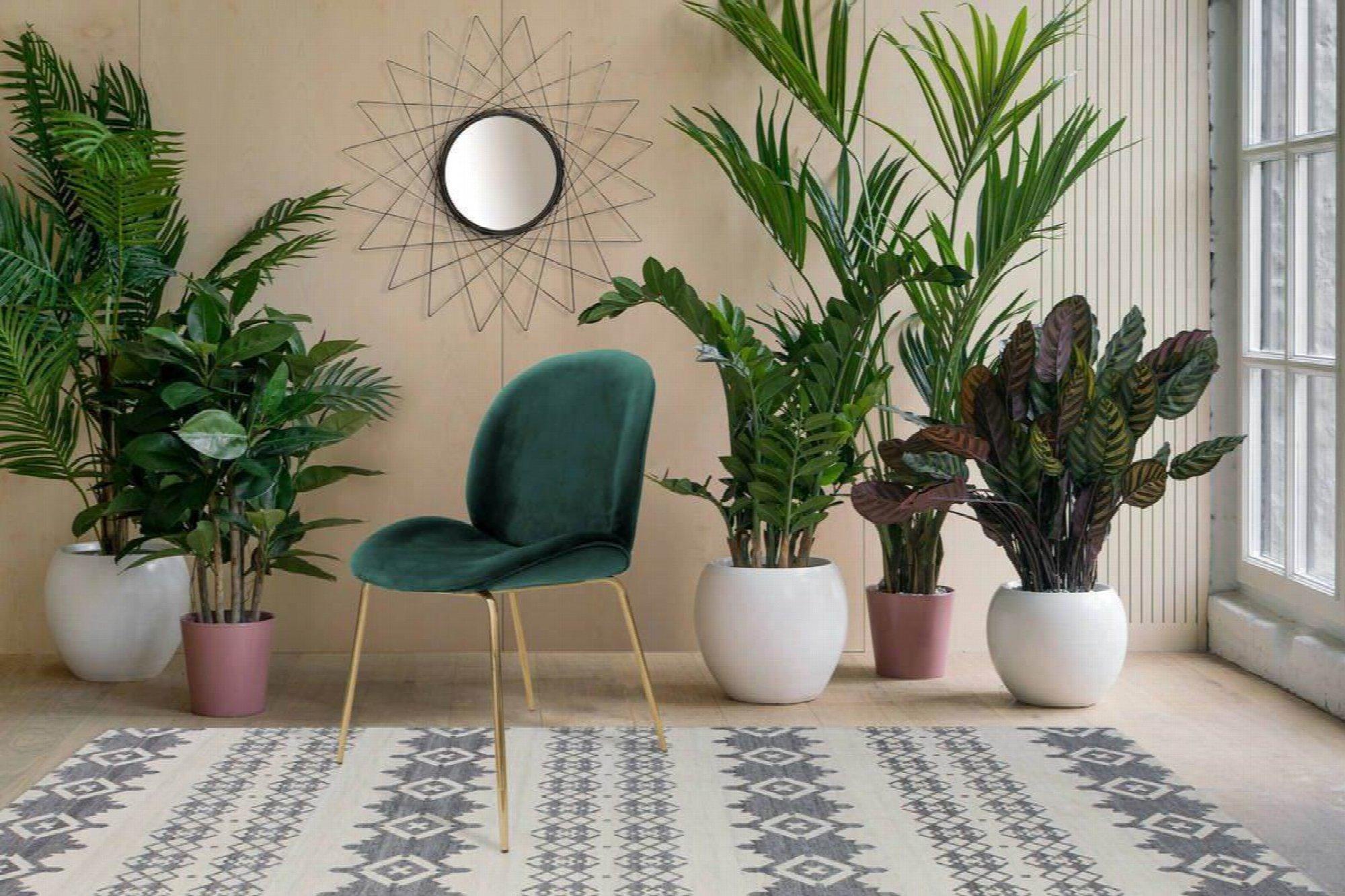 Chaise rembourrée assise vert bouteille pieds doré (x2)