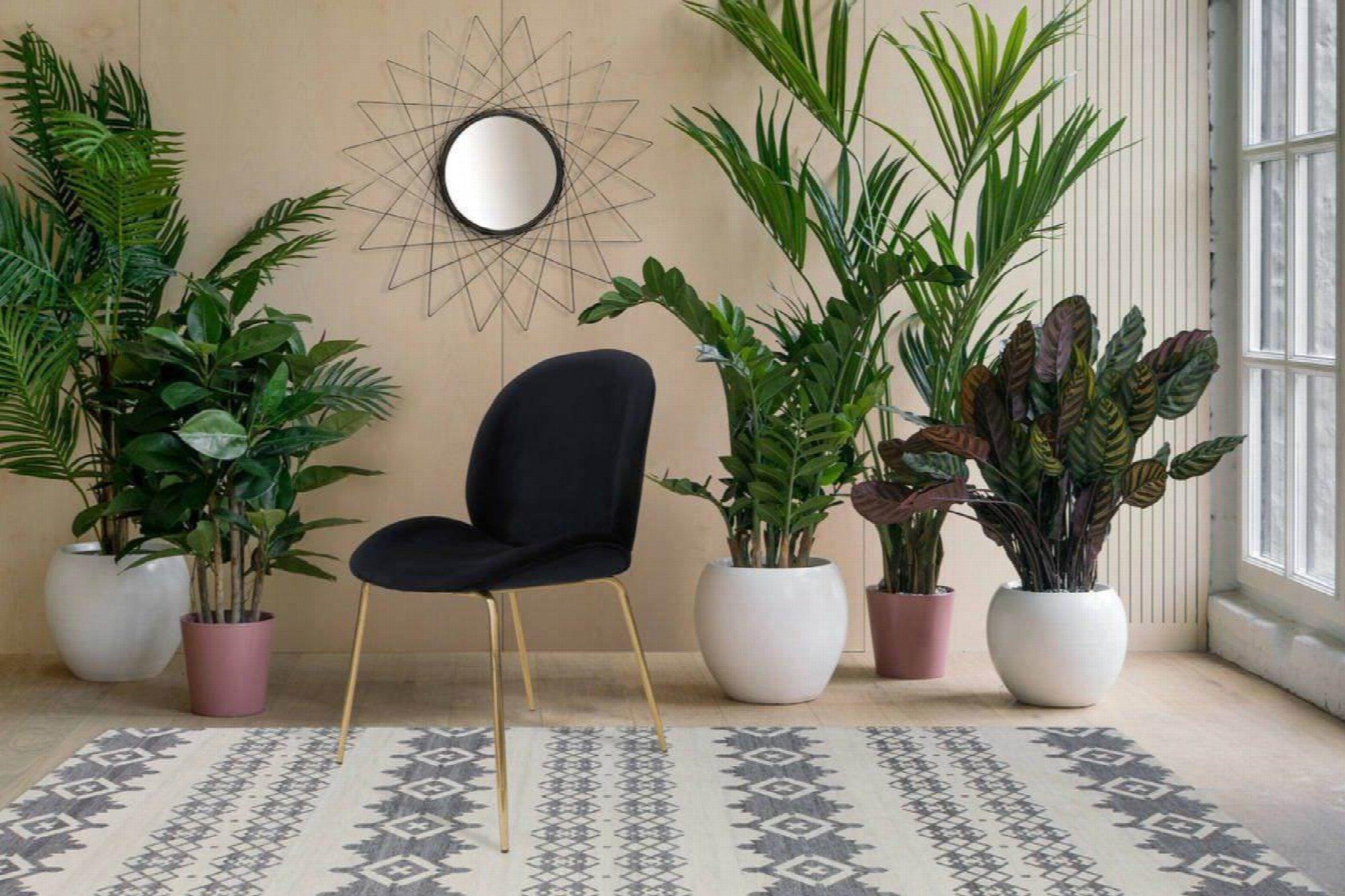 Chaise rembourrée assise noir pieds doré (lot de 2)