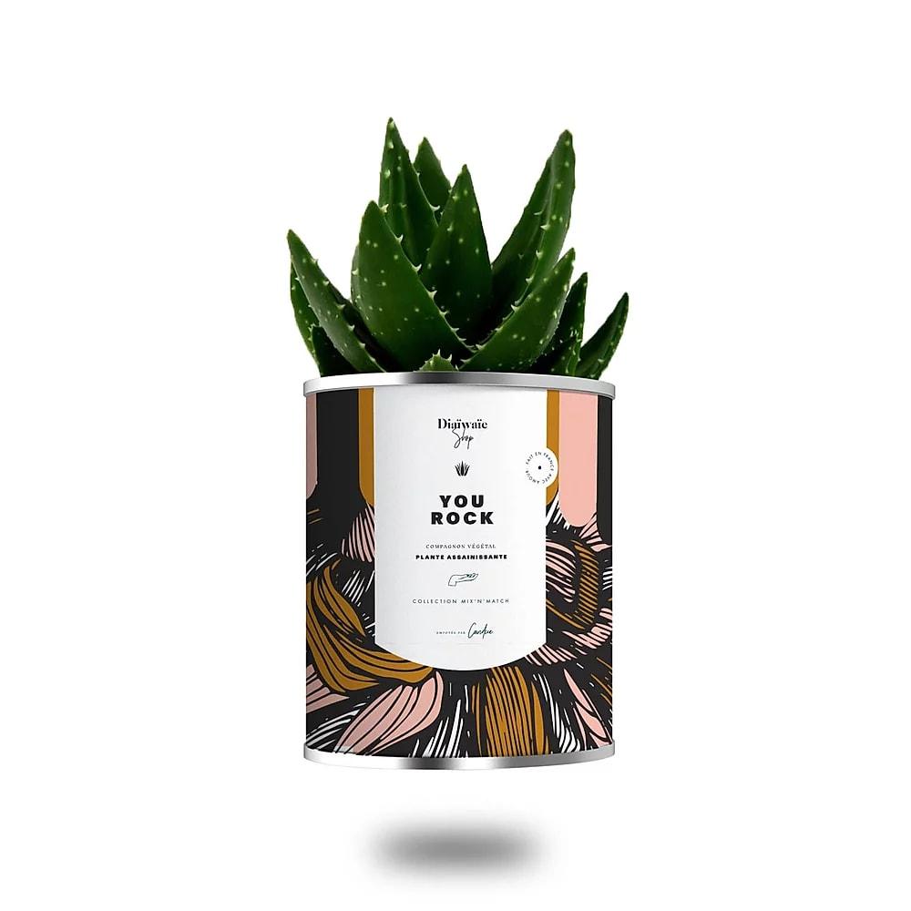 Cactus ou plante pot petit modèle you rock