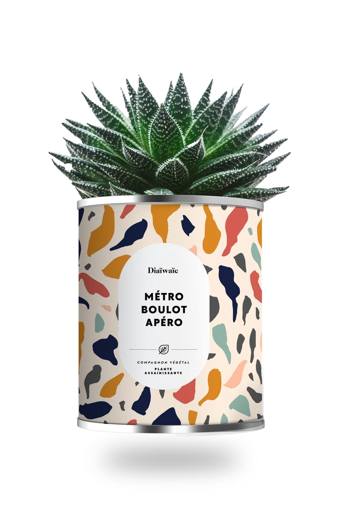 Cactus ou plante pot grand modèle métro boulot apéro