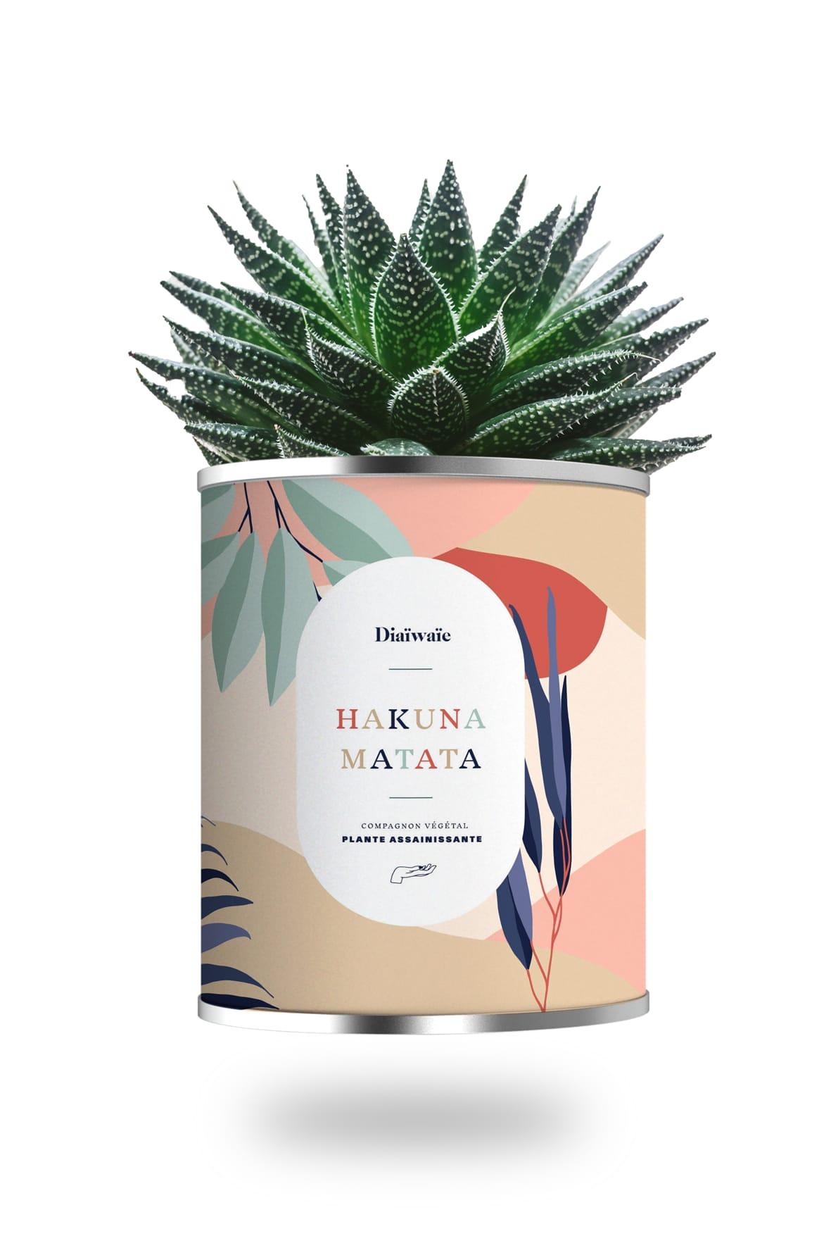 Cactus ou plante pot grand modèle Hakuna Matata