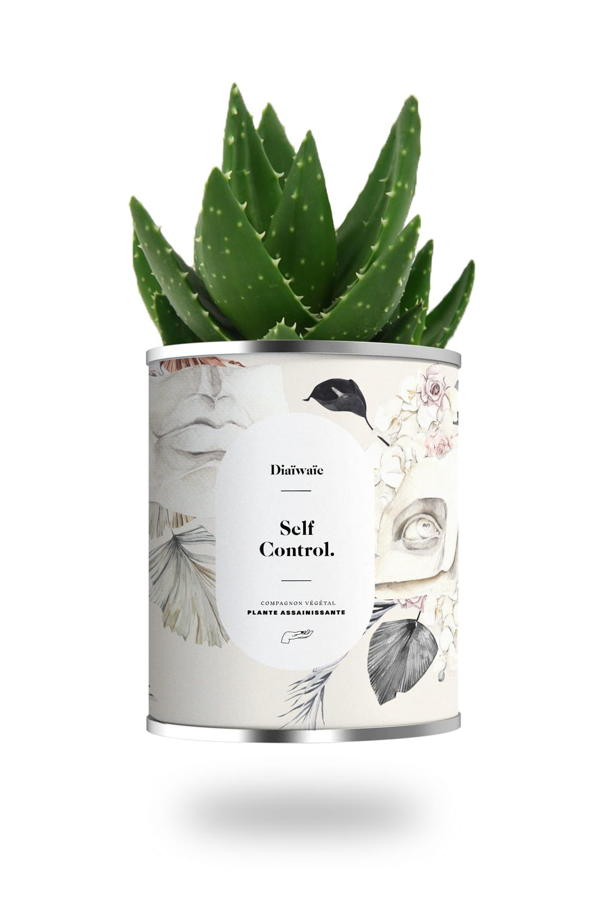 Cactus ou plante pot petit modèle self control
