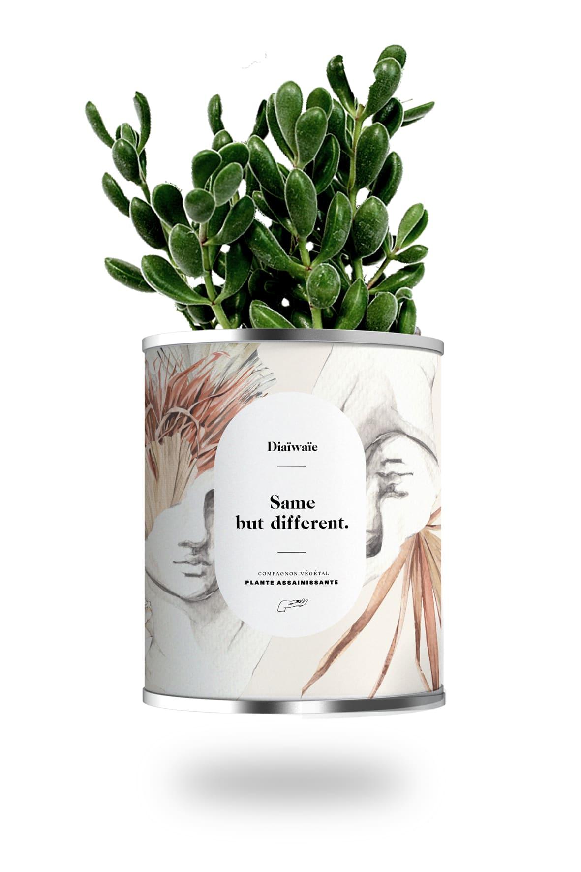 Cactus ou plante pot petit modèle same but different