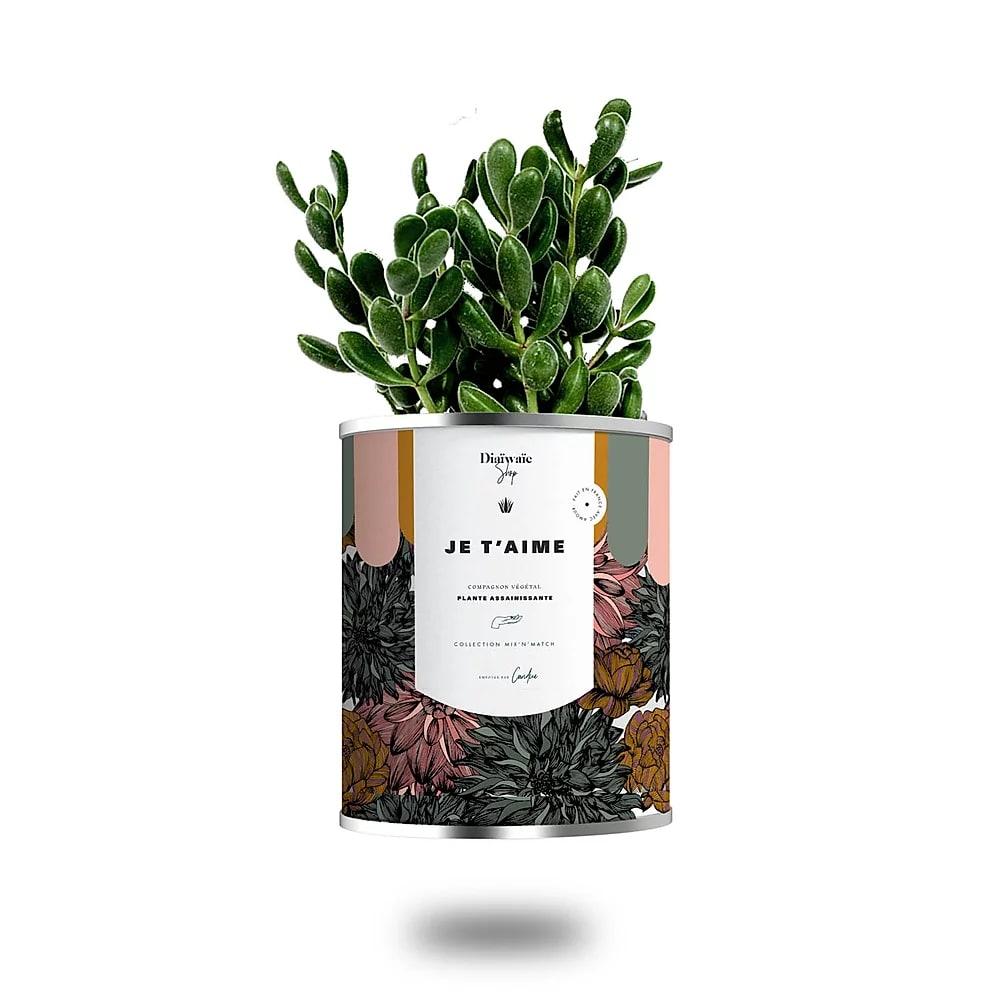 Cactus ou plante pot grand modèle je t'aime