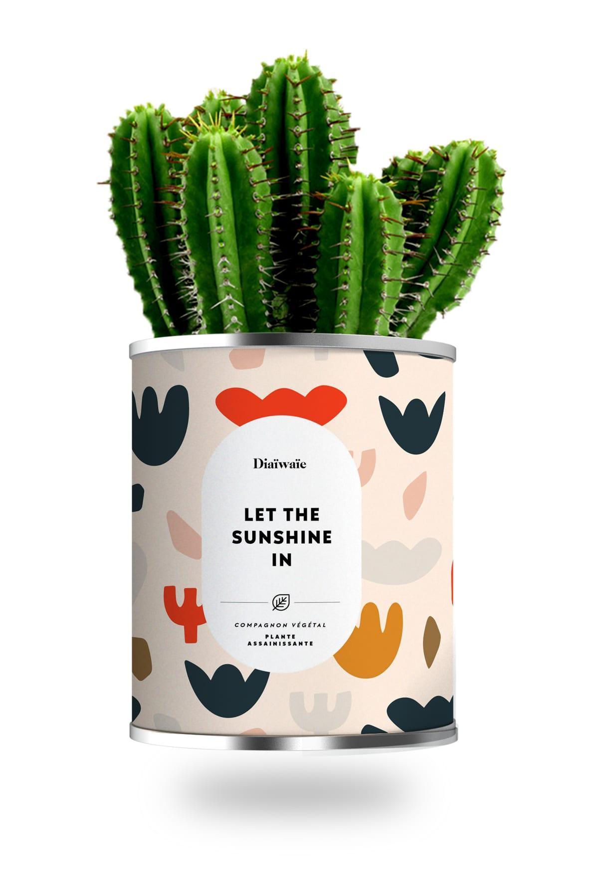 Cactus ou plante pot grand modèle let the sunshine in