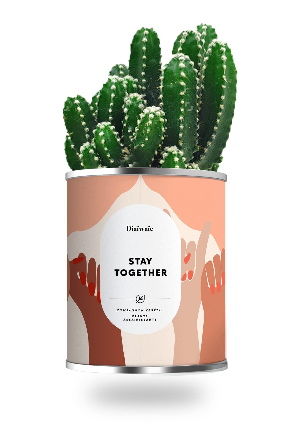 Cactus ou plante pot petit modèle stay together