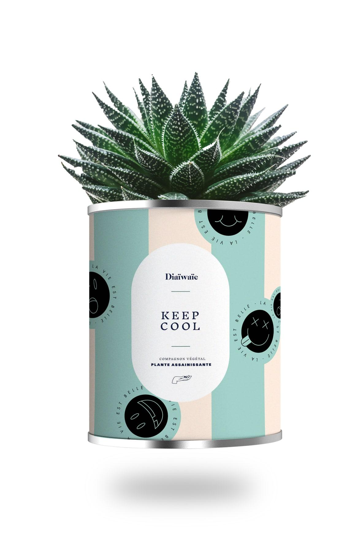 Cactus ou plante pot grand modèle keep cool