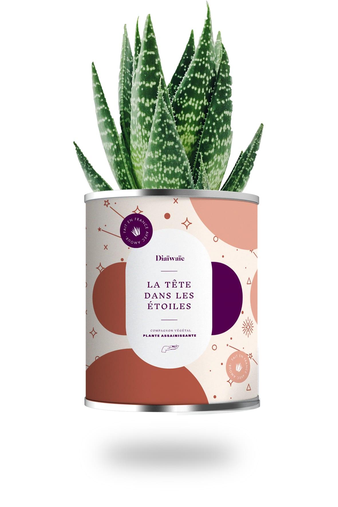Cactus ou plante pot grand modèle la tête dans les étoiles