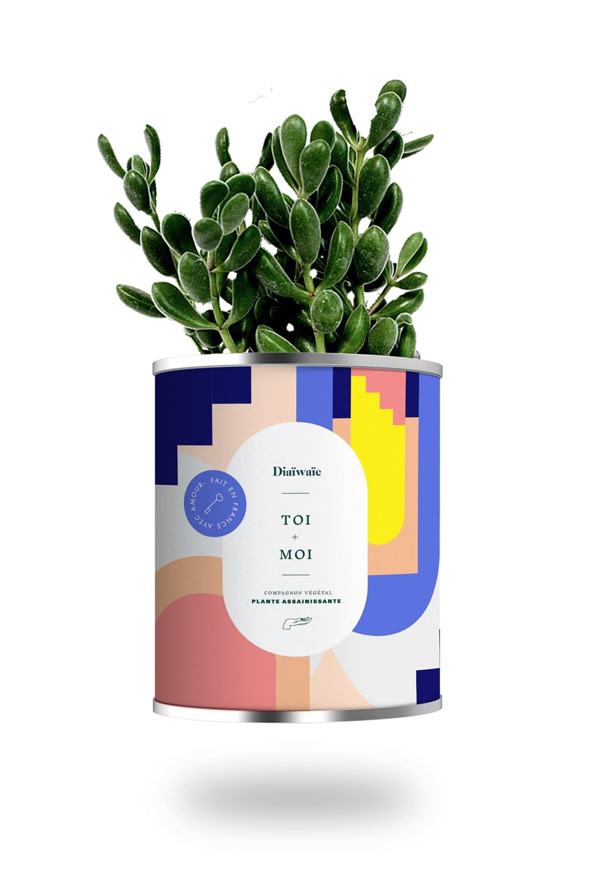 Cactus ou plante pot petit modèle toi + moi