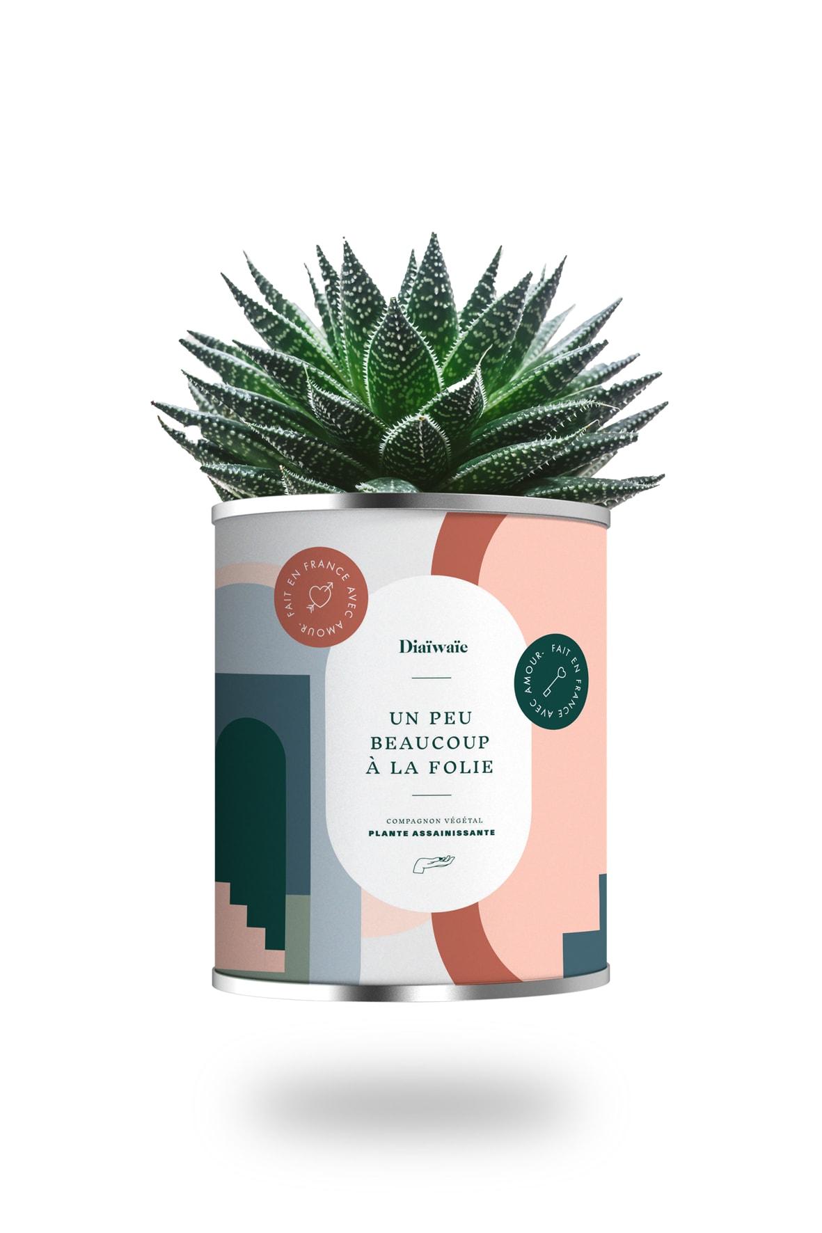 Cactus ou plante pot grand modèle à la folie