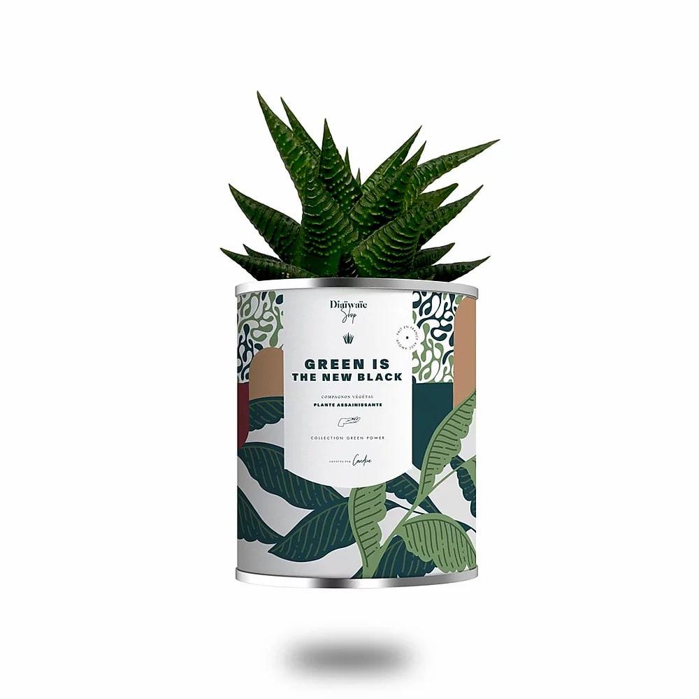 Cactus ou plante pot grand modèle Green is the new black
