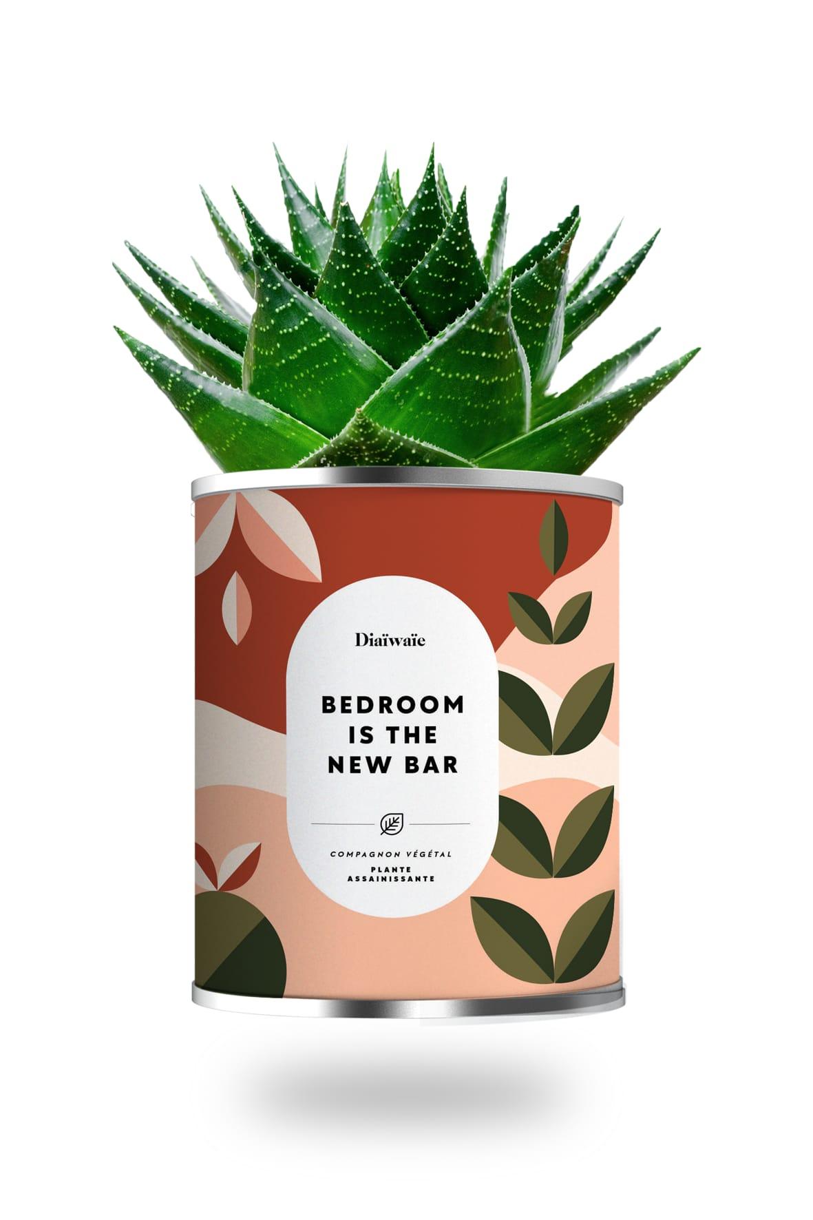 Cactus ou plante pot grand modèle bedroom is the new bar