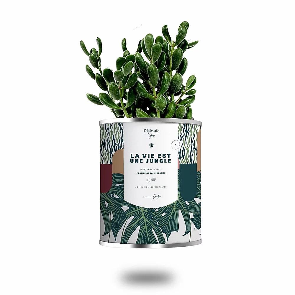 Cactus ou plante pot grand modèle la vie est une jungle