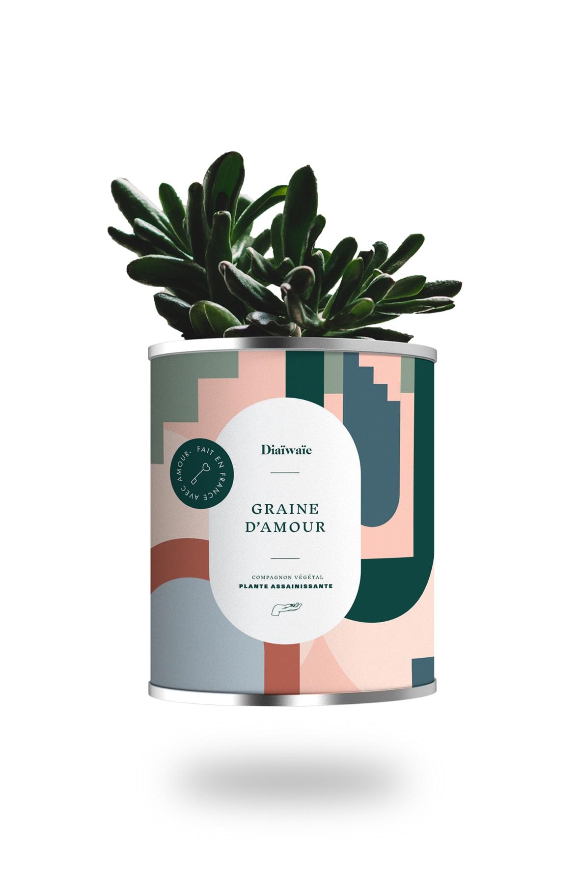 Cactus ou plante pot grand modèle graine d'amour