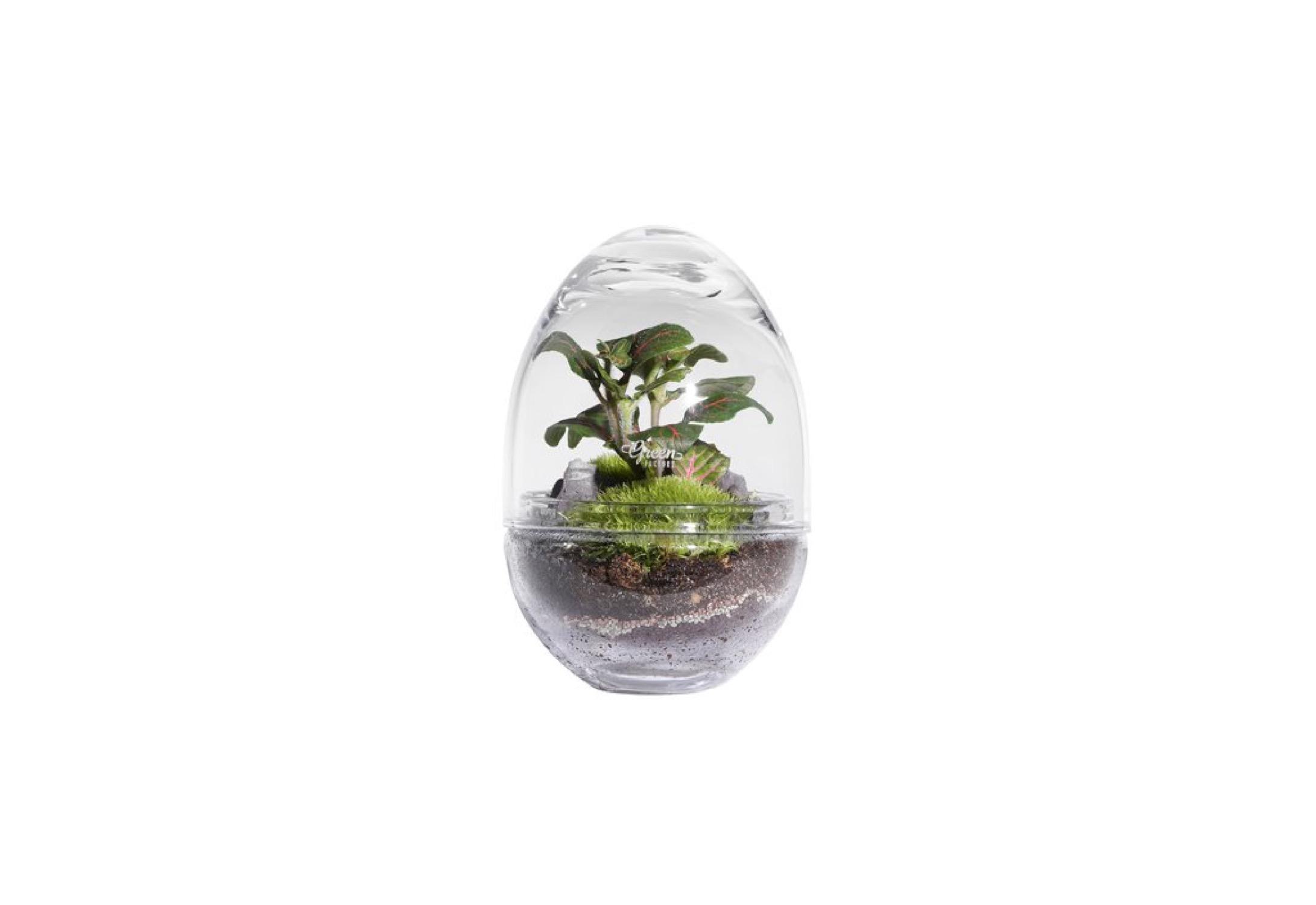 Terrarium medium jungle lab