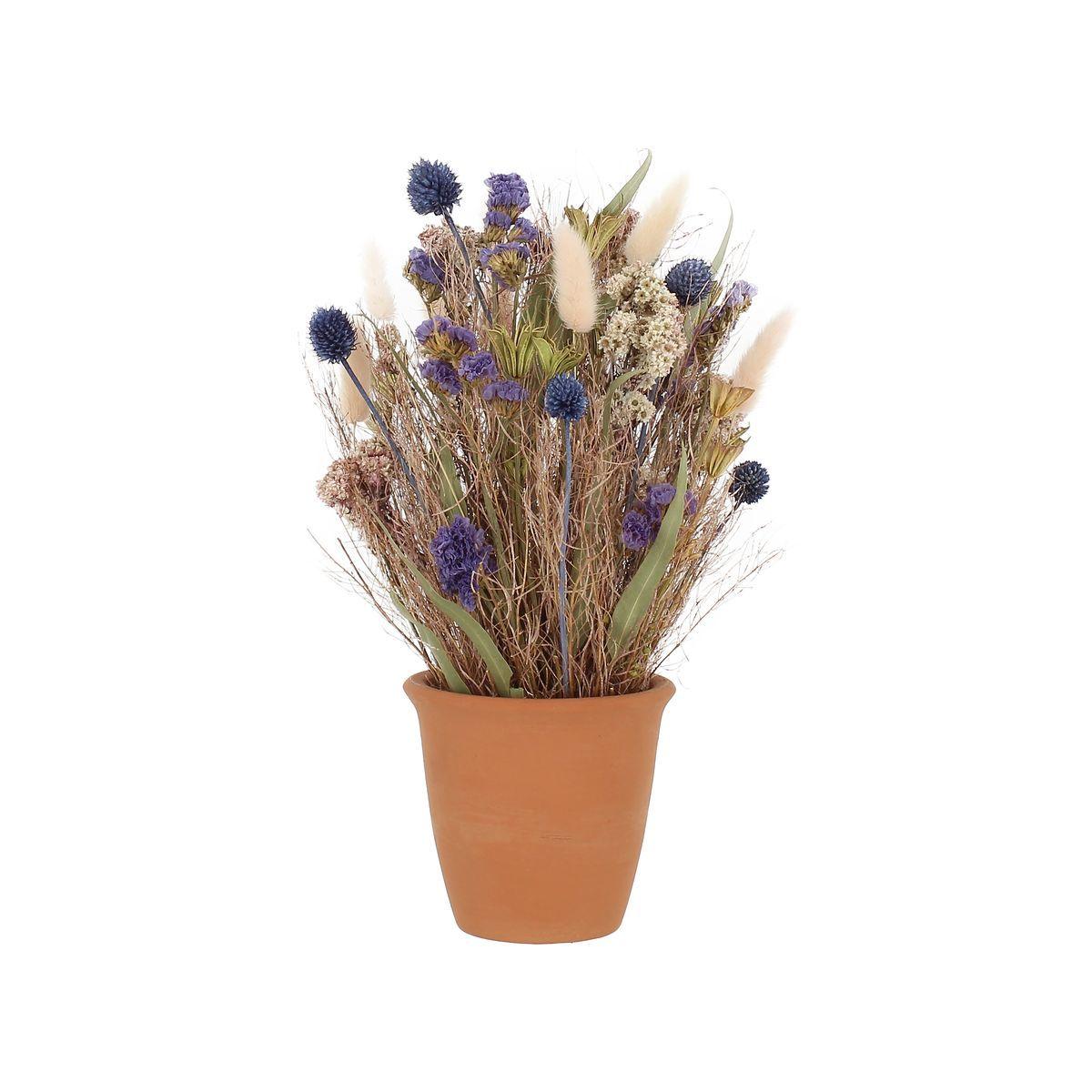 Composition fleurs séchées coloris chardon pot terracotta