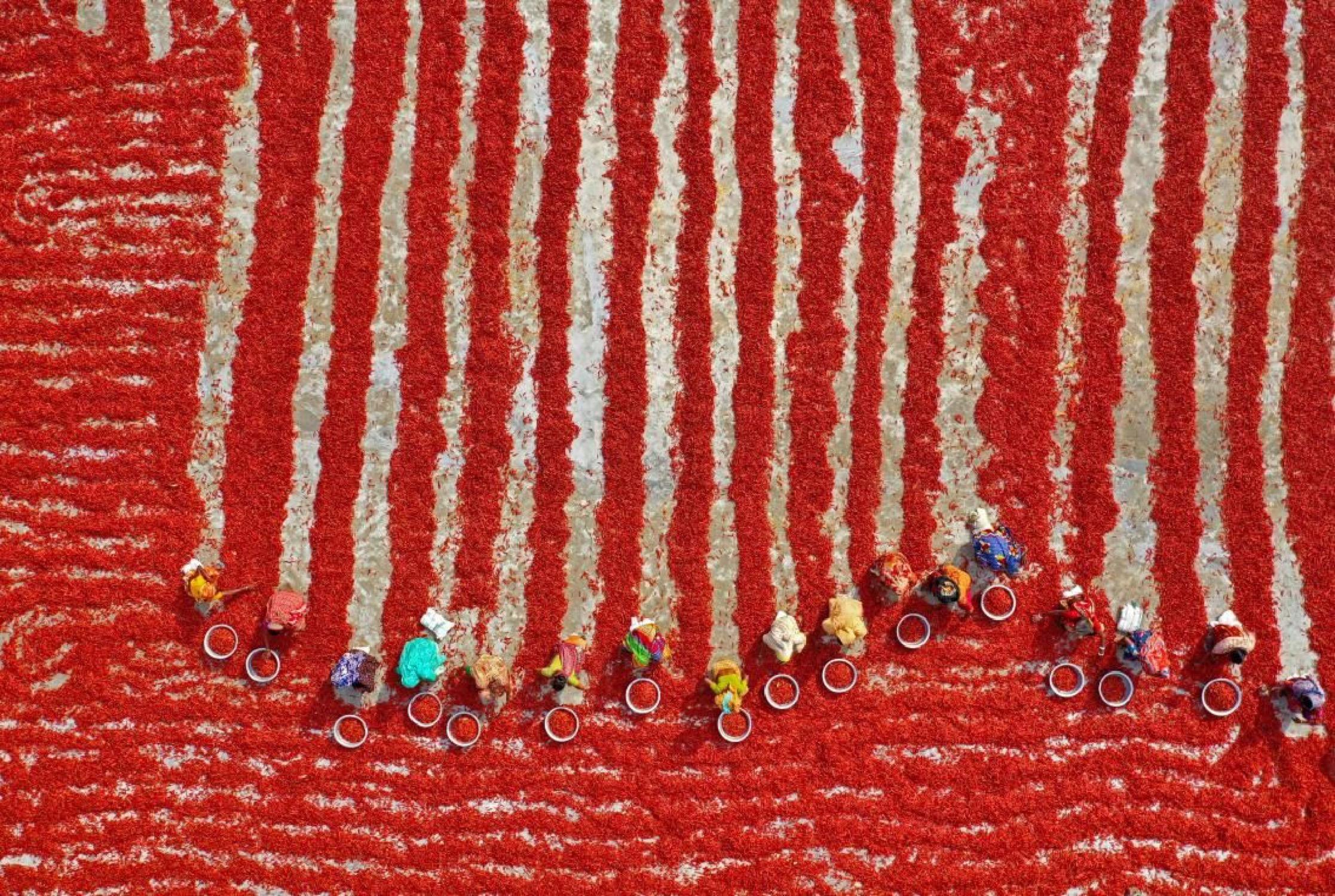 SÉCHAGE DES PIMENTS ROUGES - Photo de Pixopolitan 60x40 cm