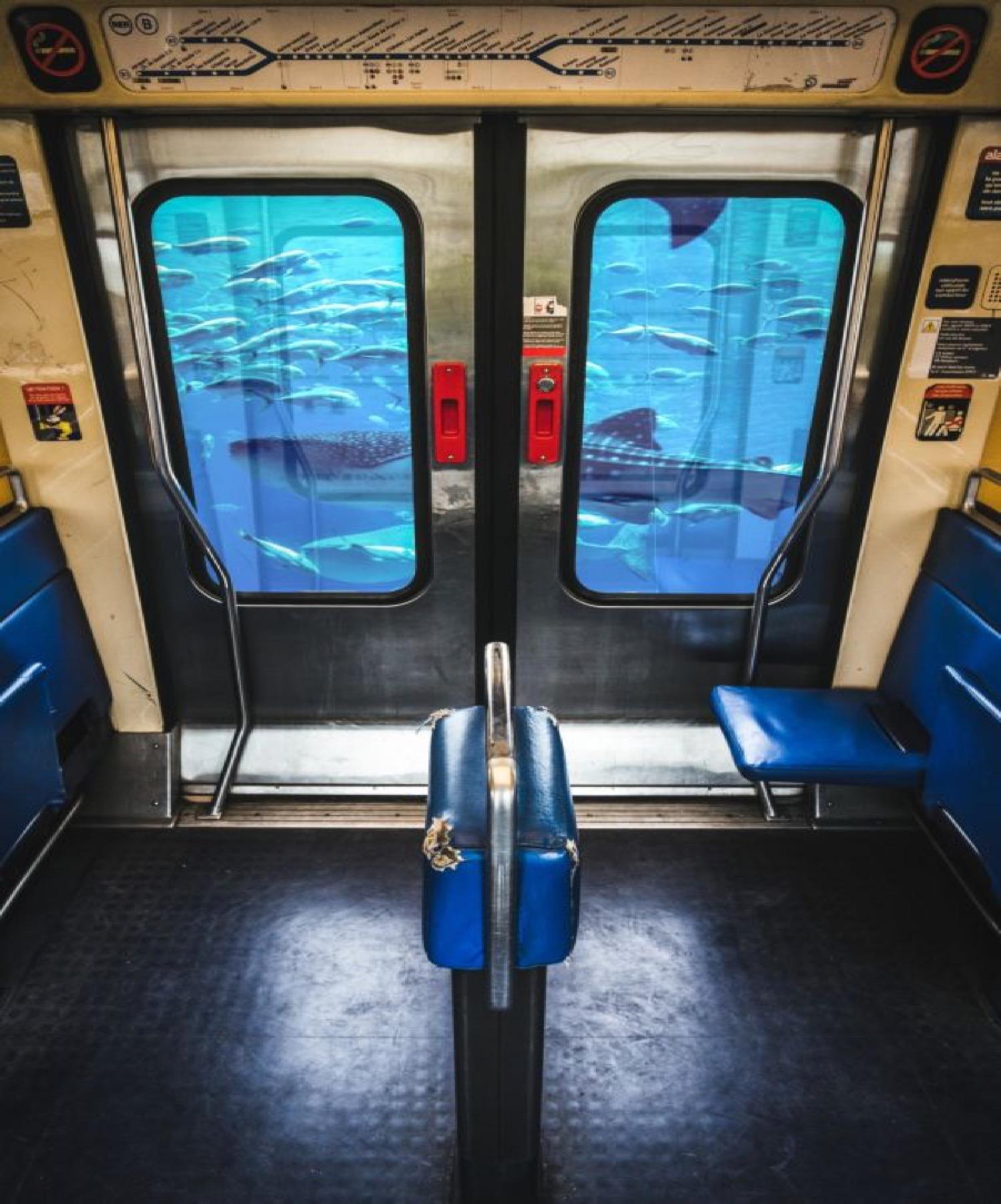 RER BOCAL - Photo de Mathieu Alemany 60x90 cm
