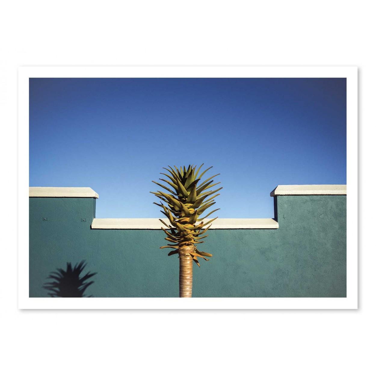 THE DESERT BLOOMS - Affiche d'art 50 x 70 cm - Linda Wride