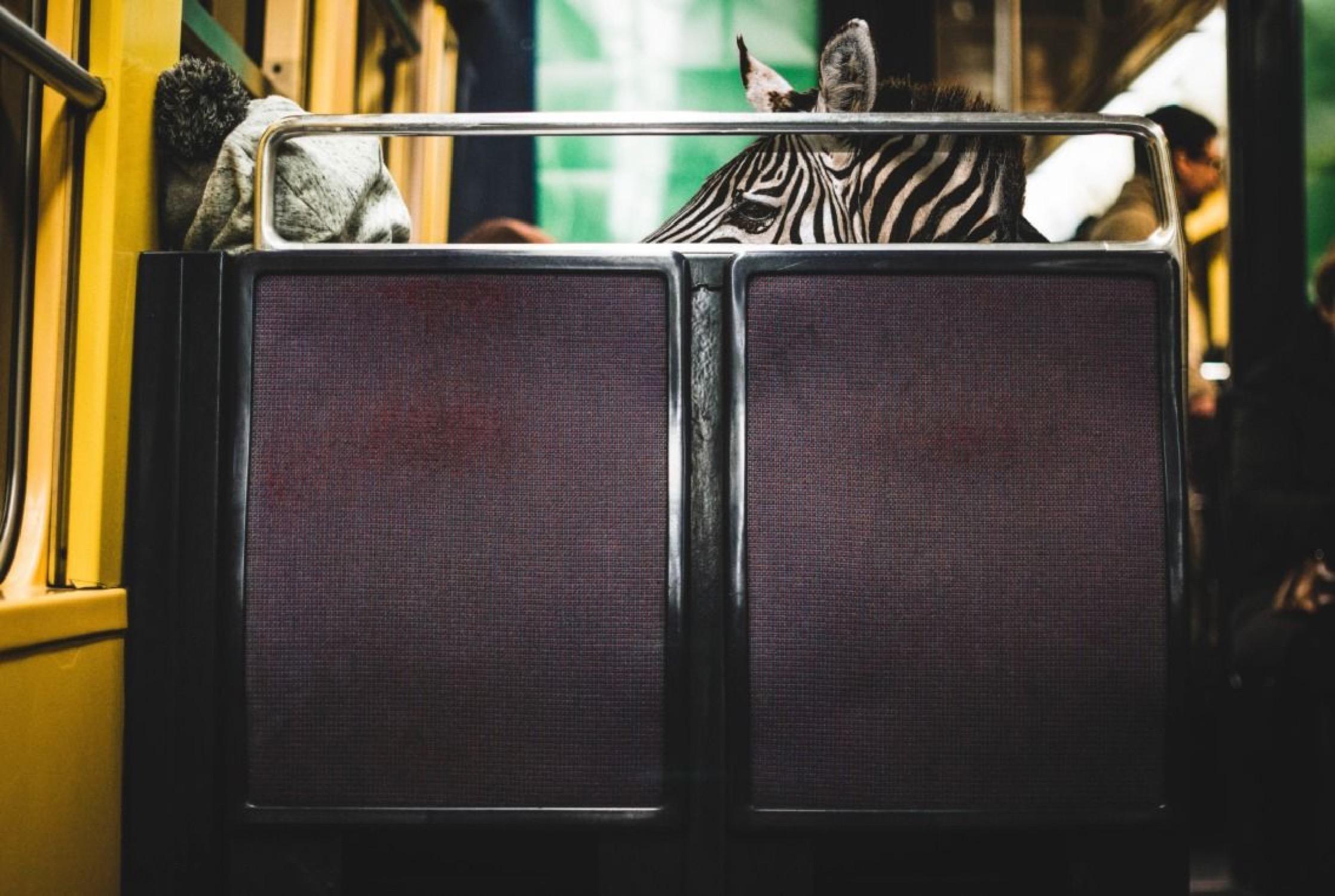 RER ZÉBRÉ - Photo de Mathieu Alemany 90x60 cm