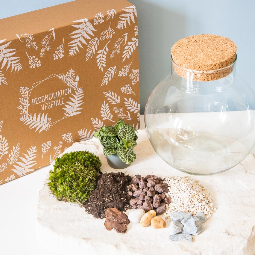 Kit pour terrarium 1 fittonia vert
