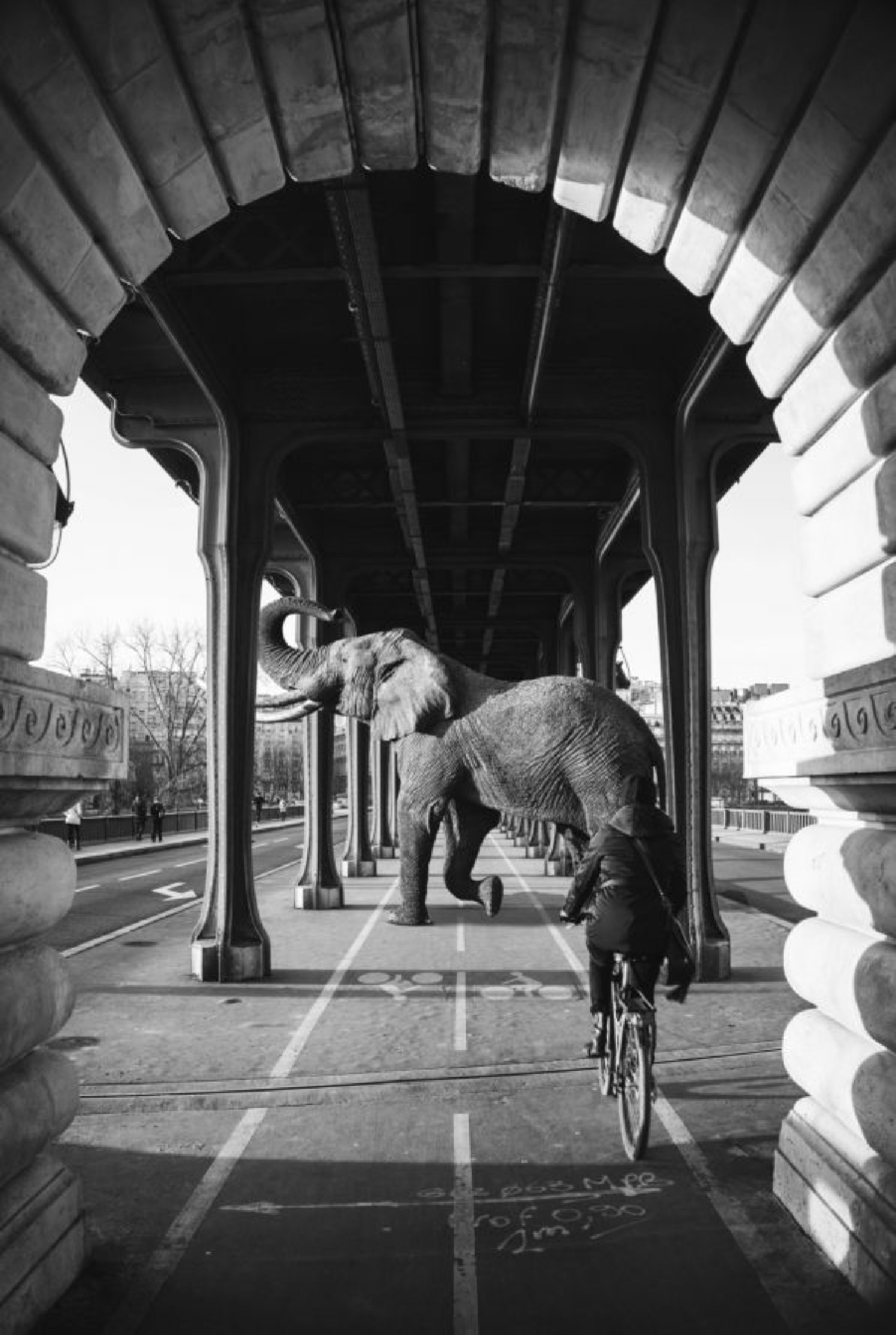 L'ÉLÉPHANT DE BIR HAKEIM - Photo de Mathieu Alemany 40x60 cm