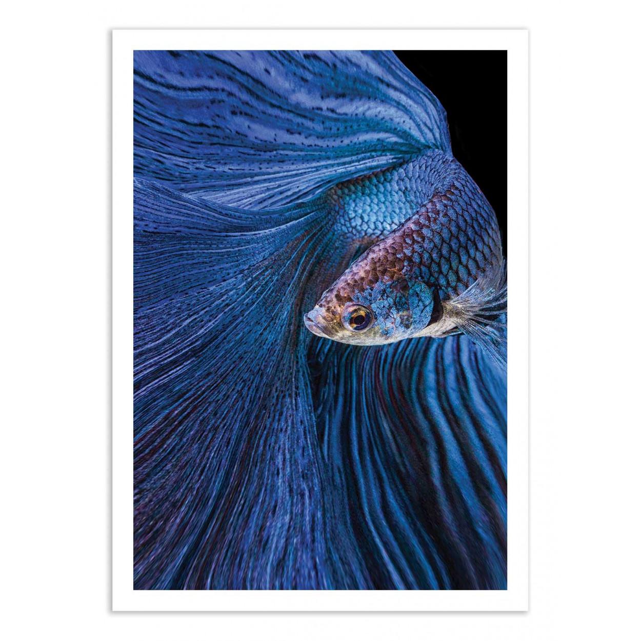 BLUE MOON - ANDY HALIL -  Affiche d'art 50 x 70 cm