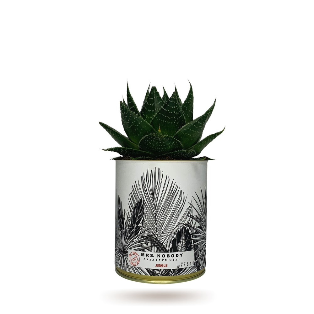 Cactus ou Succulente - Jungle - Aloe