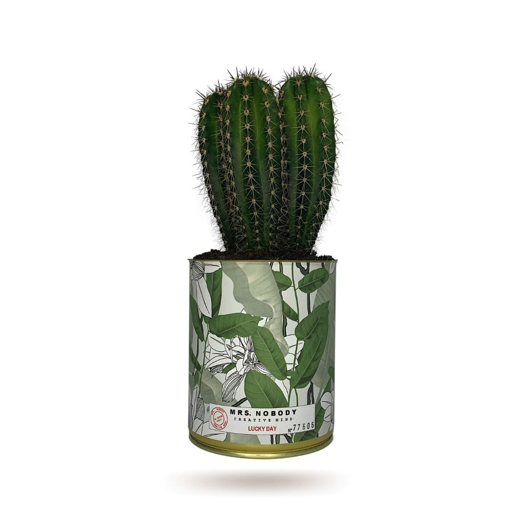 Cactus ou Succulente - Lucky Day - Cactus Colonne