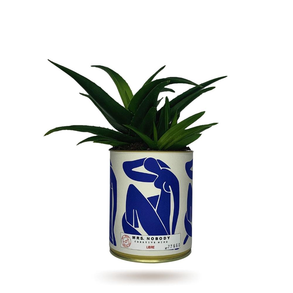 Cactus ou Succulente - Libre - Haworthia