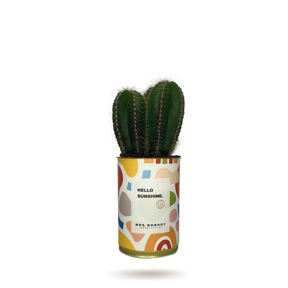 Cactus ou Succulente - Hello Sunshine - Cactus Colonne