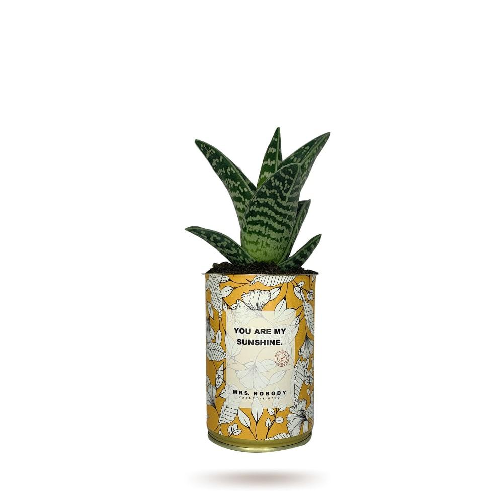 Cactus ou Succulente - You Are My Sunshine - Aloe