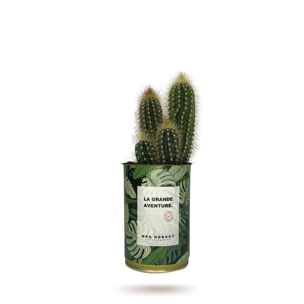 Cactus ou Succulente - La Grande Aventure - Cactus Colonne
