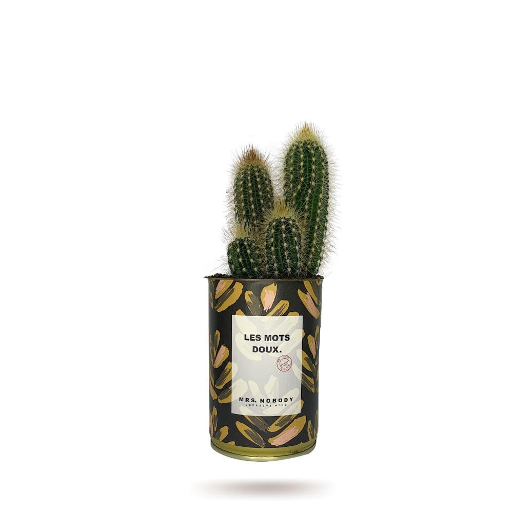 Cactus ou Succulente - Les Mots Doux - Cactus Colonne