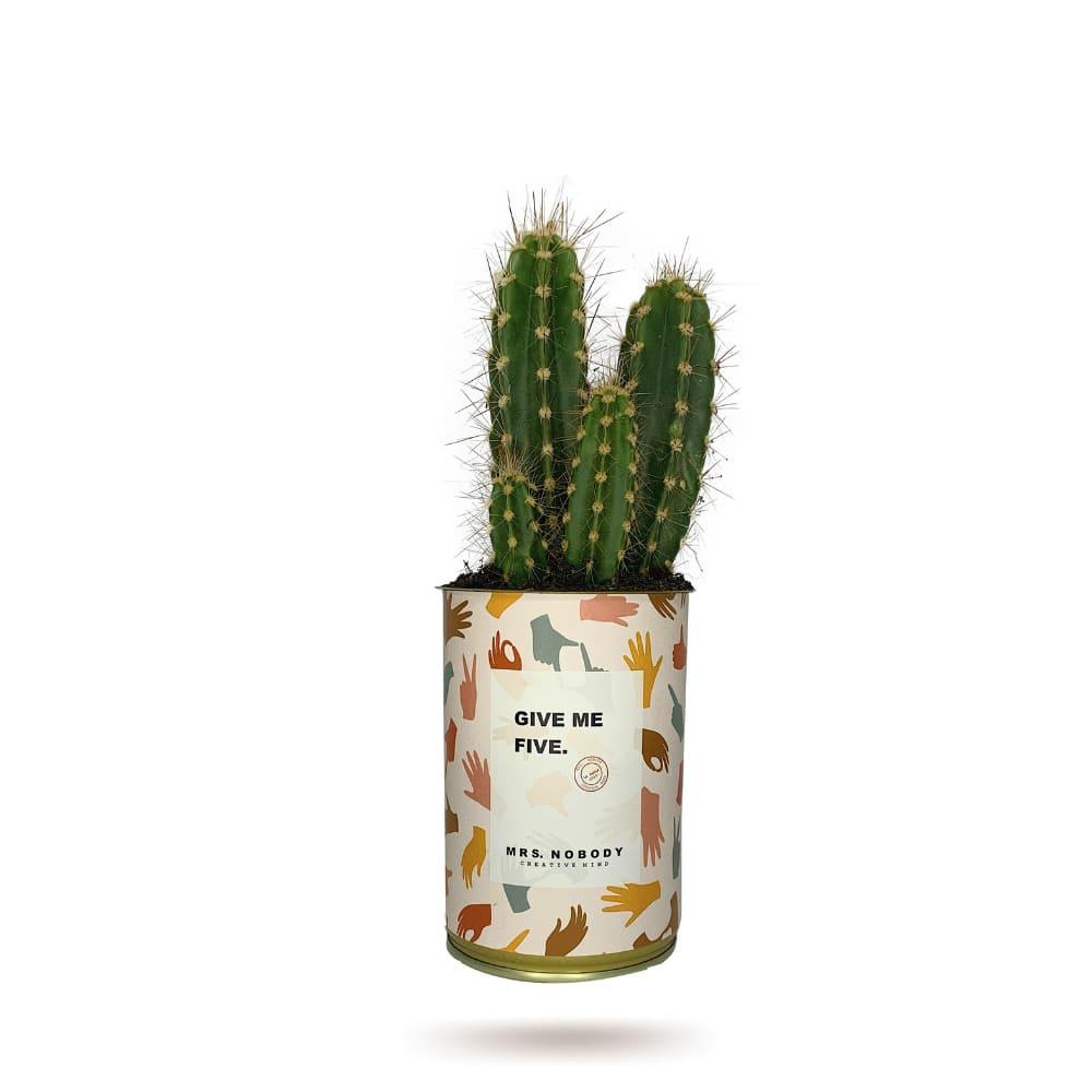 Cactus ou Succulente - Give Me Five - Cactus Colonne
