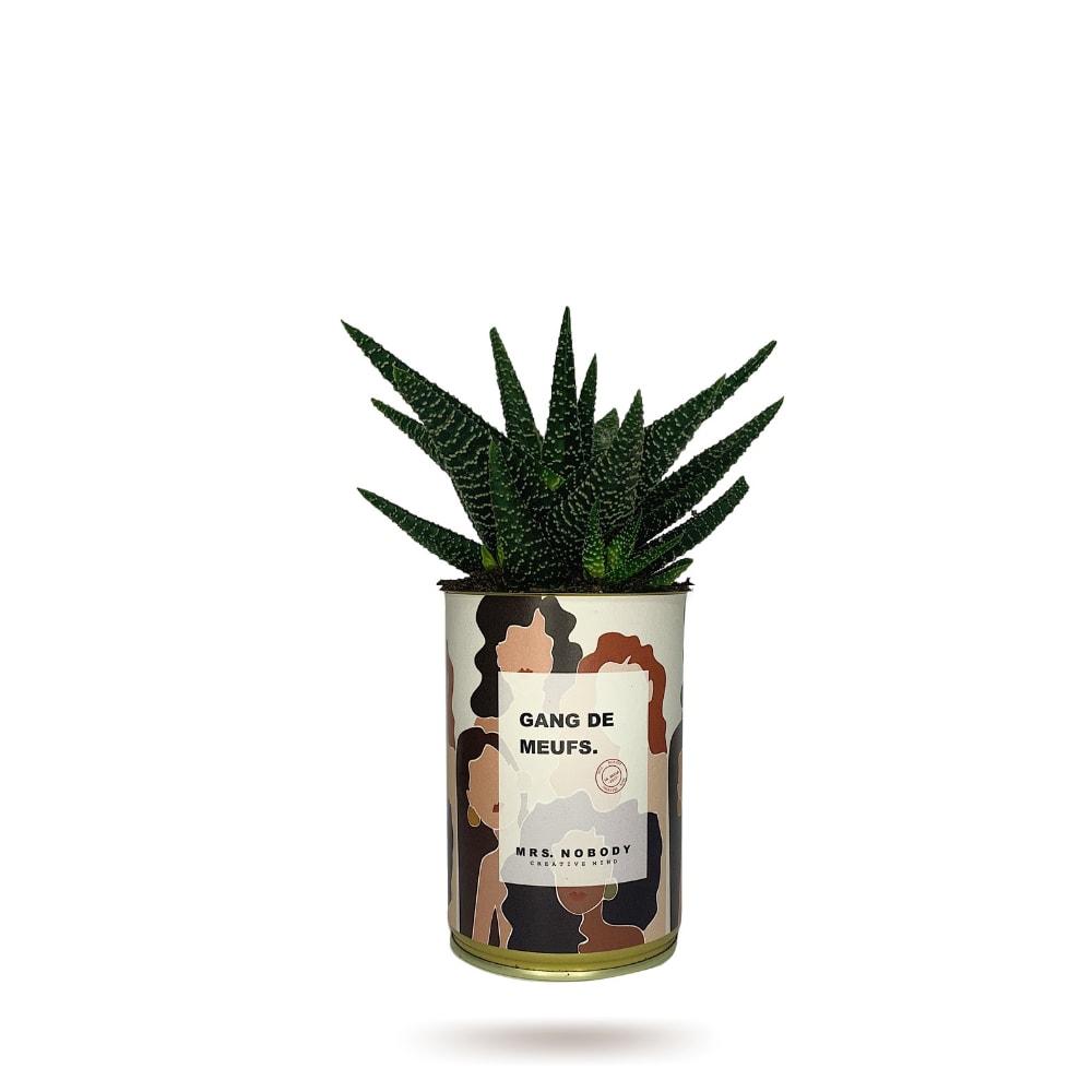 Cactus ou Succulente - Gang De Meufs - Haworthia