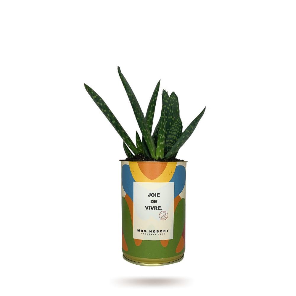 Cactus ou Succulente - Joie De Vivre - Aloe