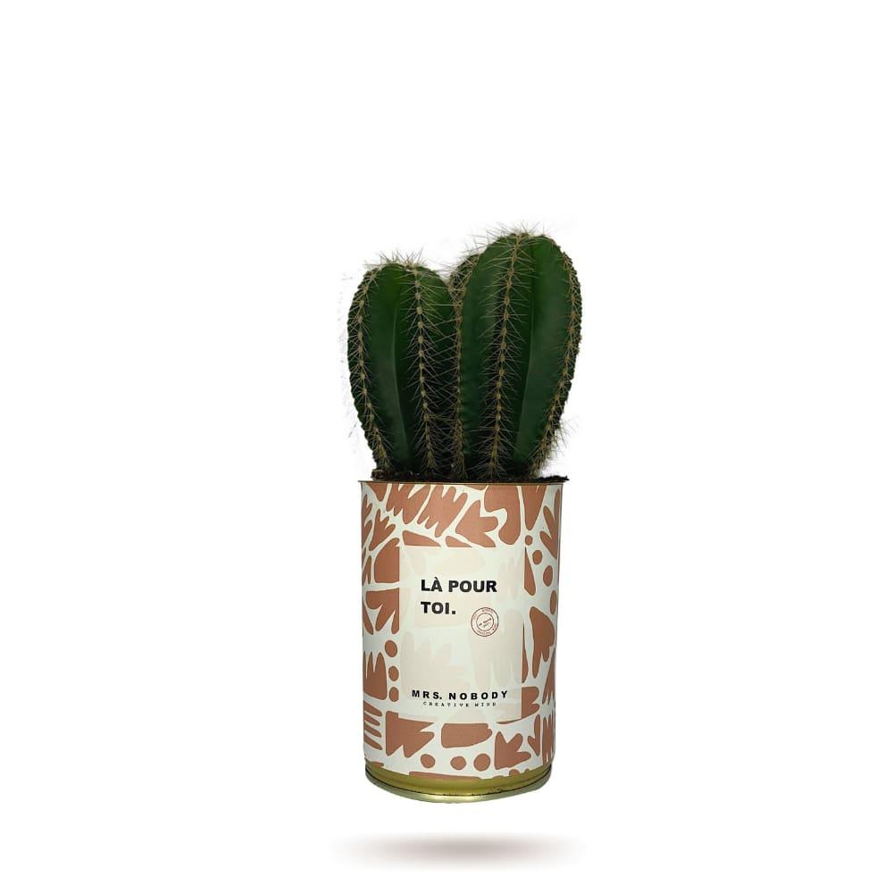 Cactus ou Succulente - Là Pour Toi - Cactus Colonne