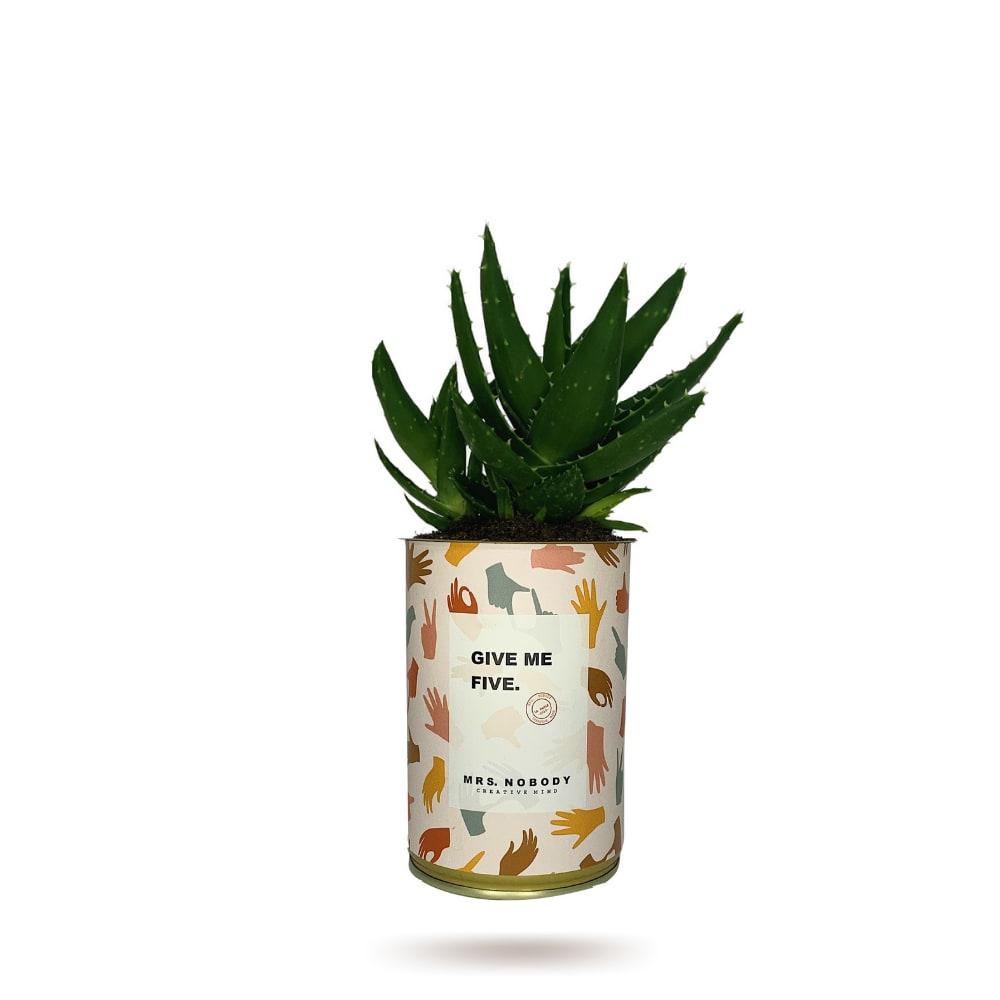 Cactus ou Succulente - Give Me Five - Aloe
